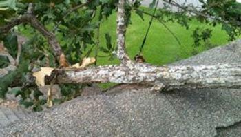 tree damage roof