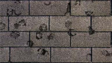 hail damage shingles