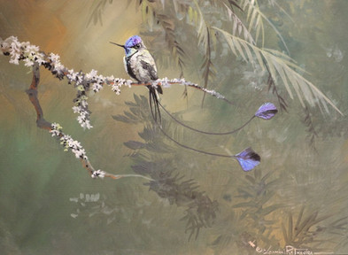 Spatula Tailed Hummingbird 9x12 Acrylic