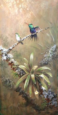 Violet-Bellied Hummingbird.JPG
