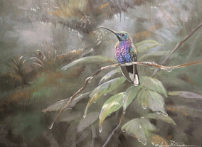 Violet Sabre Wing 9x12 Acrylic Gouche on