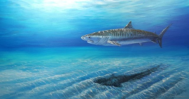 """""""Tiger of the Sea"""""""