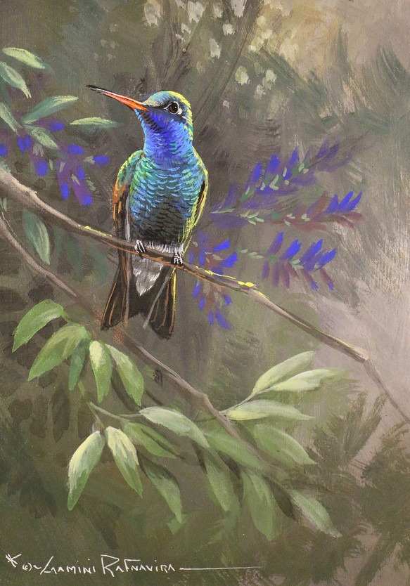 Broad Billed Hummingbird.JPG