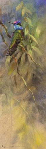 Magnificent Hummingbird.JPG