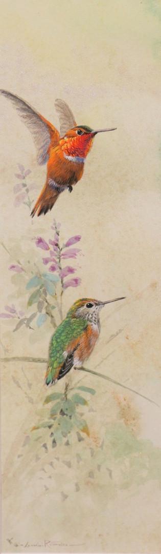Rufus Hummingbirds.JPG