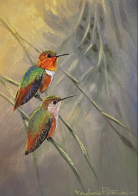 Alan's Hummingbirds.JPG