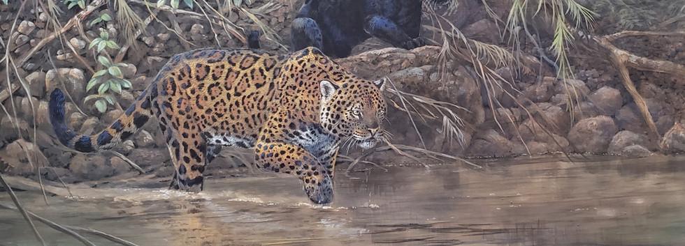 Jaguars.jpeg