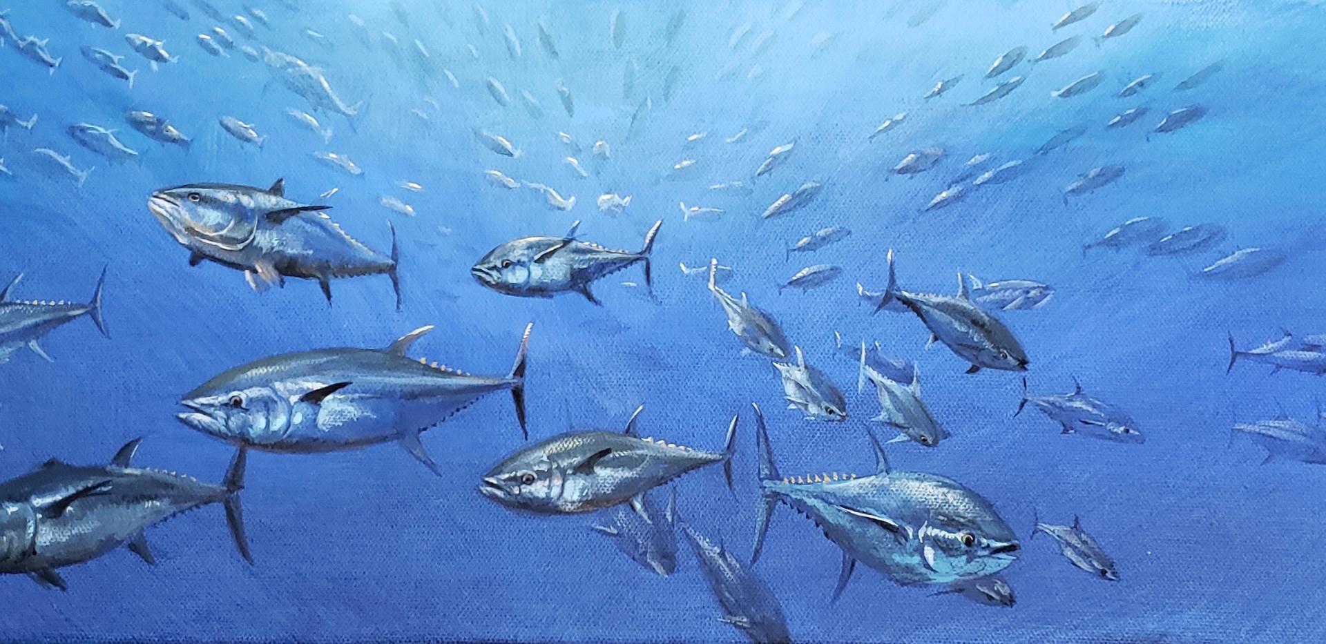 Shoal of Blue Fin Tuna