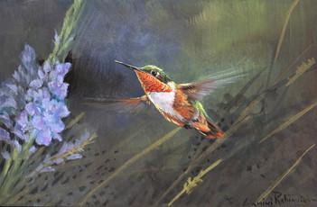 Allan's Hummingbird 5x7 Acrylic Gouche o