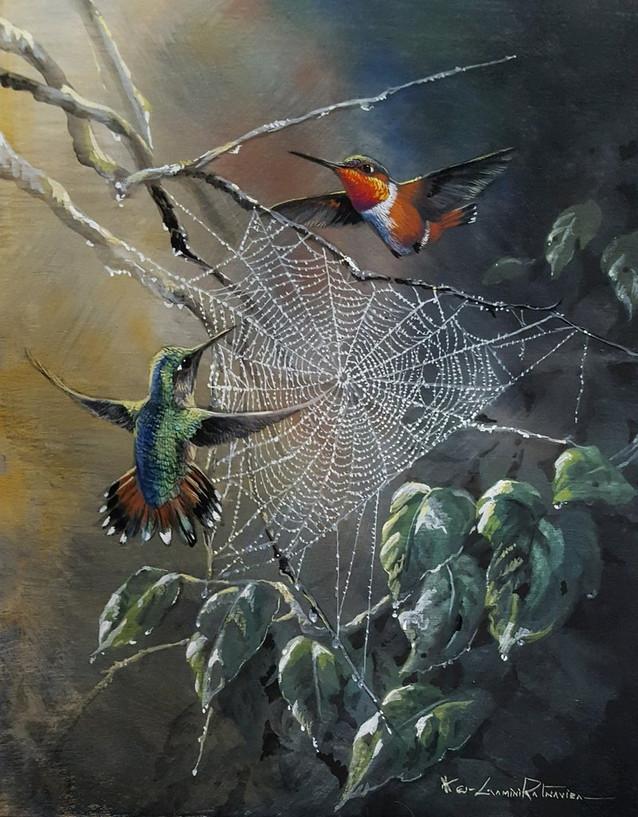 Allen's Hummingbirds -Dream Catchers.jpg