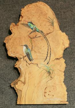 Streamer Tail Hummingbirds.JPG