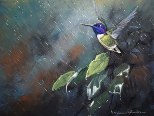 Costa's Hummingbird - Rain Catcher.jpg