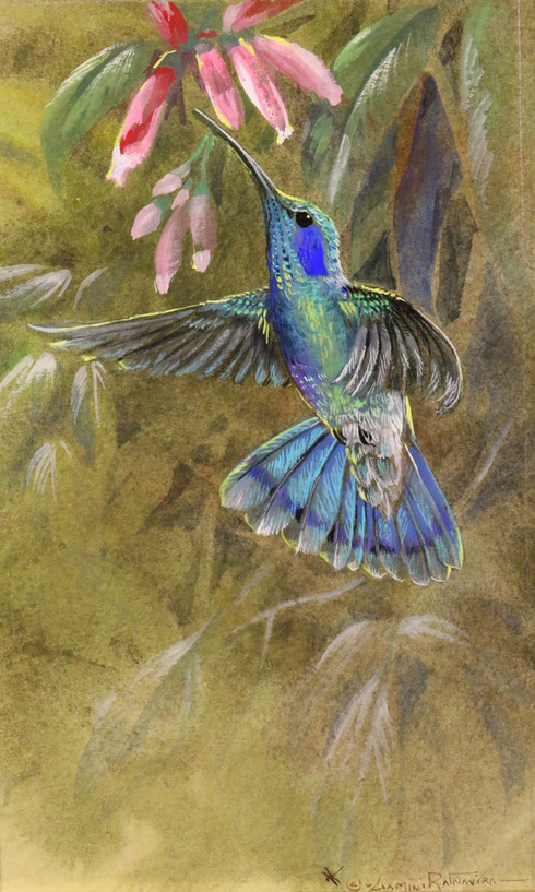 Green Violet Ear.JPG