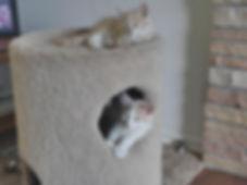 Cat Furniture in Seattle