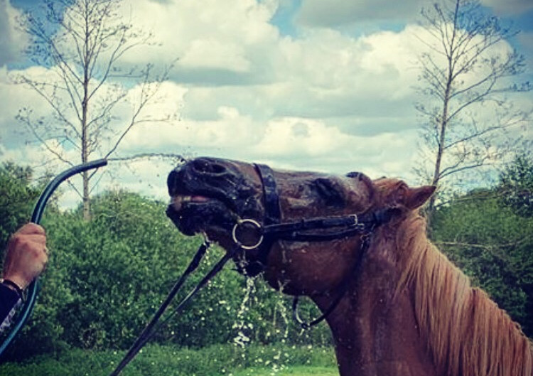 Learning to be hosed