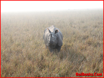 One Horned Rhino - State Animal of Assam