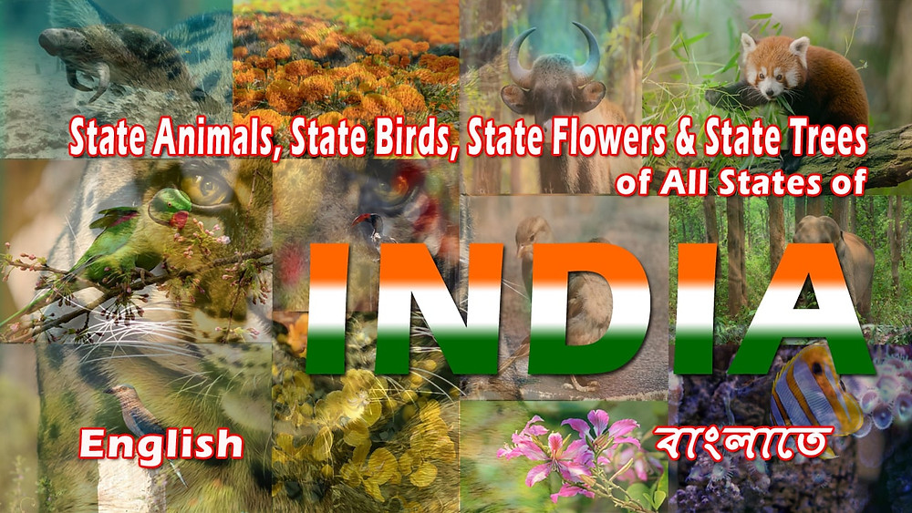 Like India as a country also it's states have their State Animals, State Birds, State Flowers & State Trees. In this post, we are going to learn about State Animals, Birds, Flowers, and Trees.