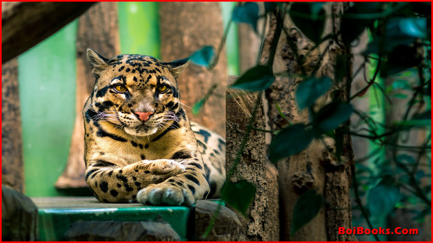 Clouded Leopard - State Animal of Meghalaya