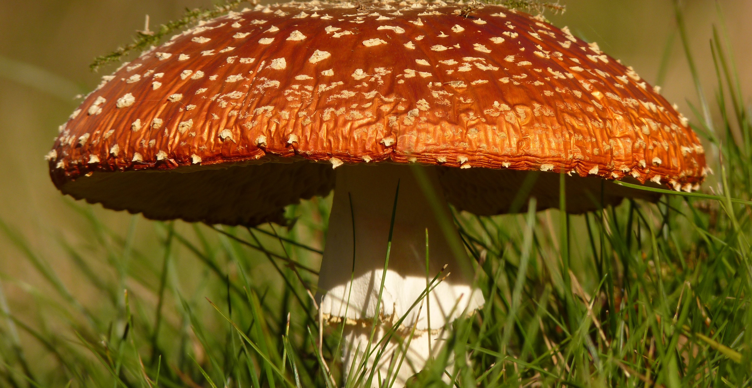 Mushrooms are one of the rich source of vitamin D