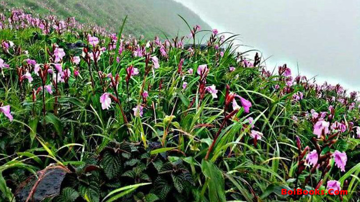 Shirui Lily - State Flower of Manipur