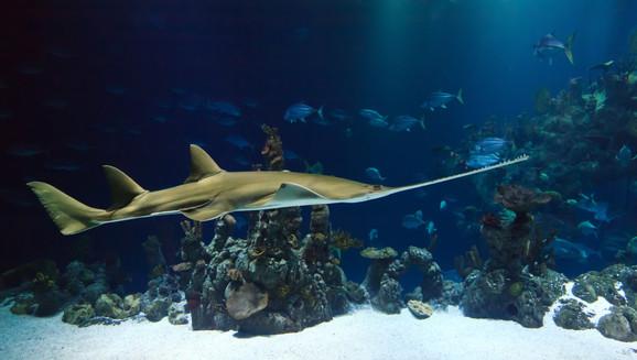 Shark & Cod Fish's Liver Oil - Rich source of Vitamin A