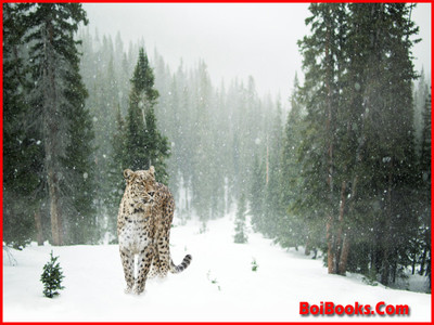 Snow Leopard - State Animal of Himachal Pradesh