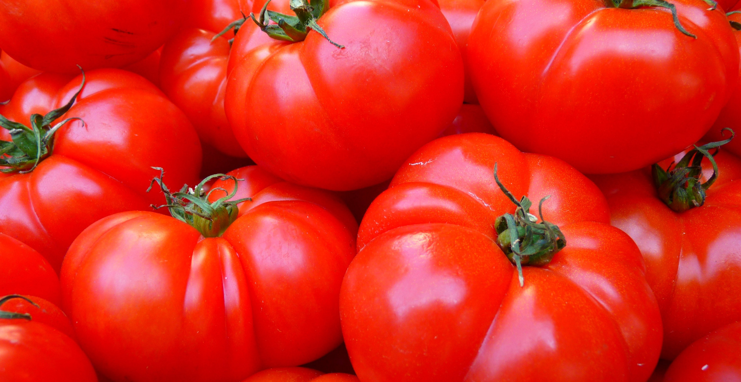 Fresh Tomatoes are the rich source of Vitamin K to human body.