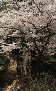 Japan - Robert Knaeps.jpg