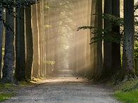 Zoniënwoud-8169218 - Mark Mertens.jpg