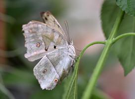 Vlinder - Andre Gabriël.jpg