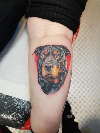 Full color dog portrait