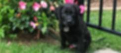 JPEG image-307C4D2688BC-1_edited.jpg