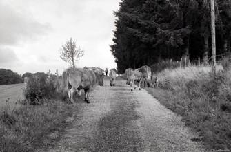 Les Limousines de Marc © Léa Neuville