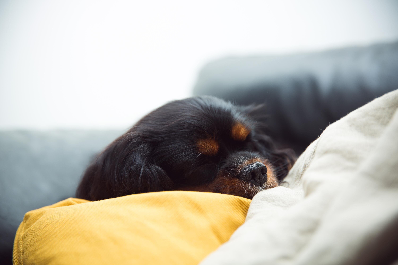 Sleeping time 🥰