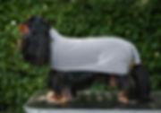 Drycoat | cavalier king charles spaniel