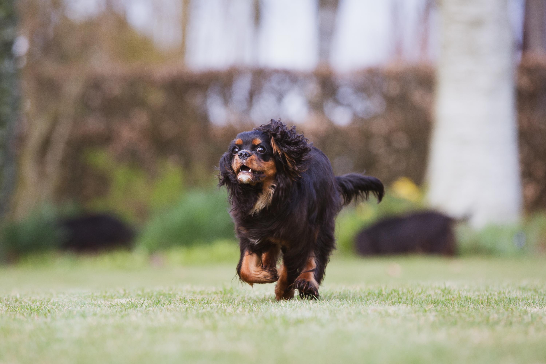 Saga loves to play and run.