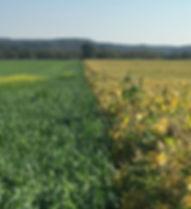 regenerative-agriculture-hero.jpg