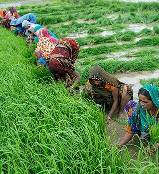 agri-india.jpg