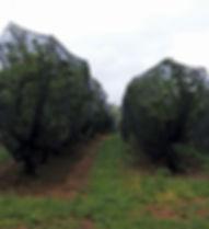 shade-netting-for-fruits.jpg