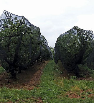 shade-netting-for-fruits.jpg