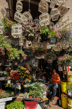 La fleuriste rue Bernard, Qc