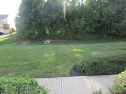 View from front door is a broad lawn and woods.