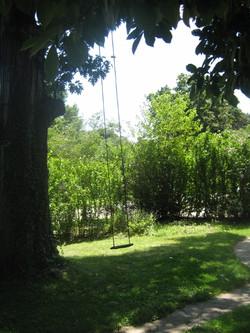 Backyard hedge along Ruckle
