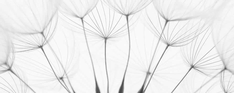 close up of dandelion seeds _edited.jpg