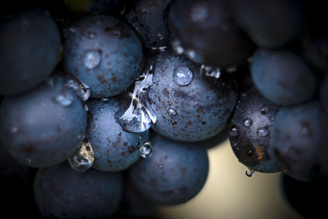 AdobeStock_292640732 grapes.jpeg
