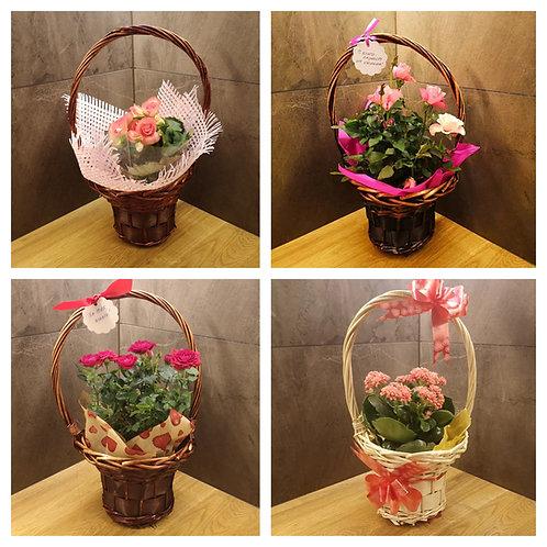 Средно сезонно цвете по Ваш избор в подходяща кошница