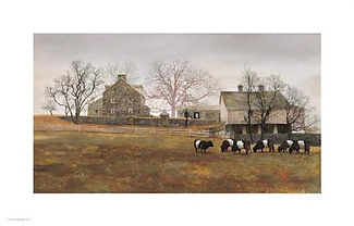 Peter_Sculthorpe _Belted_Galloway_cows_s