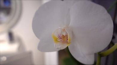 Kosmetikstudio Cosmetarium Blumen.jpg