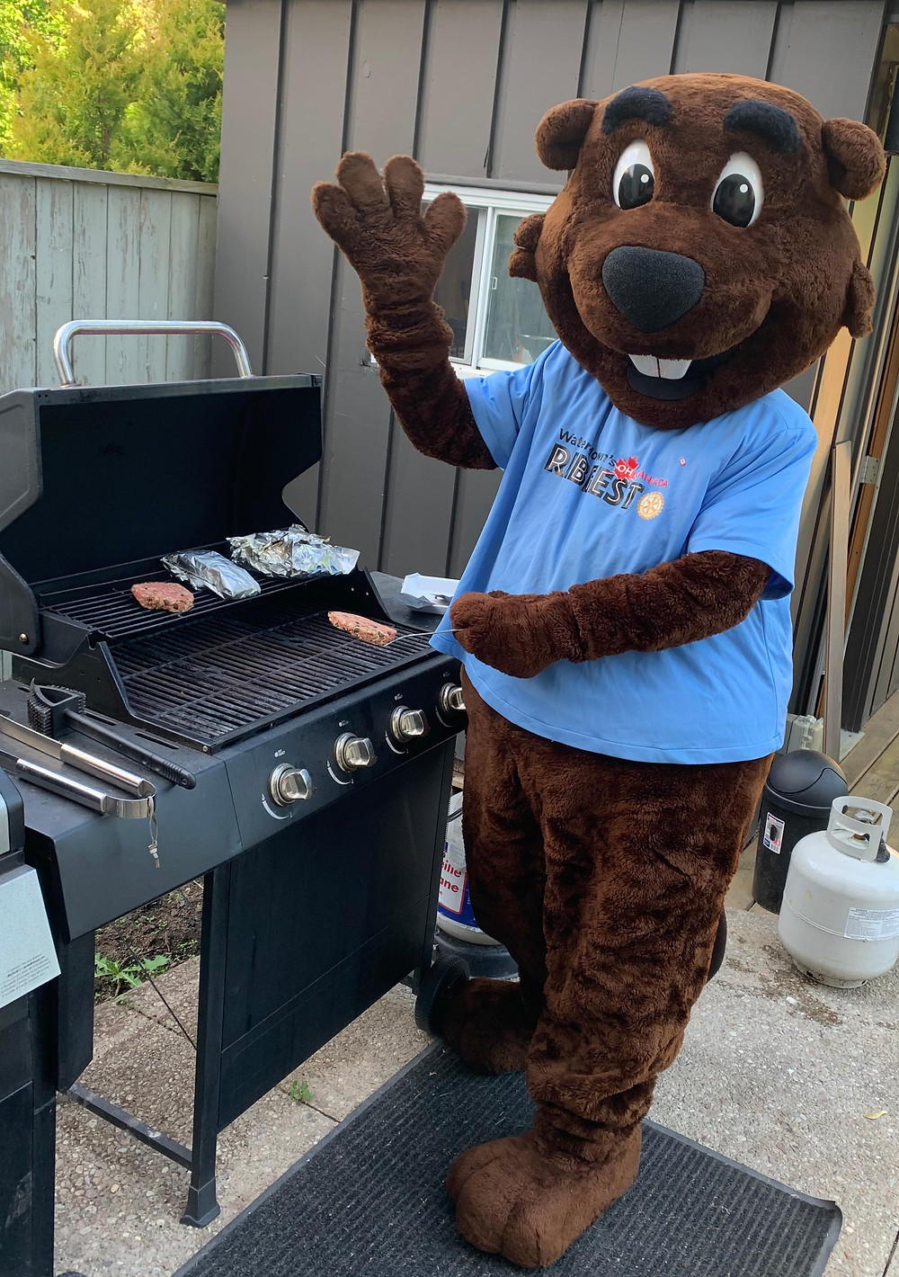 Bucky has been practising his grilling moves, but he'll be out and about on Virtual Ribfest weekend!