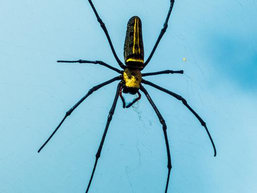 Czy w ostatnim czasie w twoim domu zauważyłeś więcej pająków? - Specjalista wyjaśnia